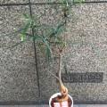 ボトルツリー/¥3,300